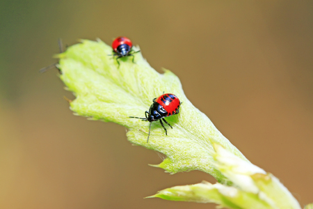 Blue bugs on green plant Stock Photo