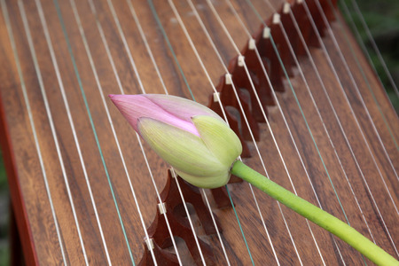 Koto strings and lotus