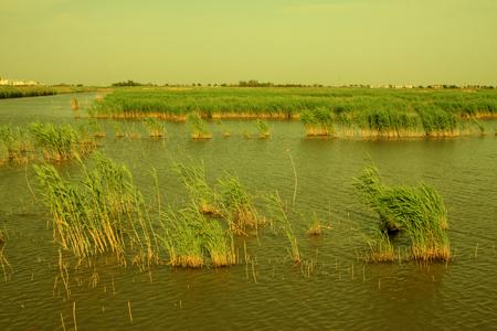 Wetland park natural scenery Stock Photo