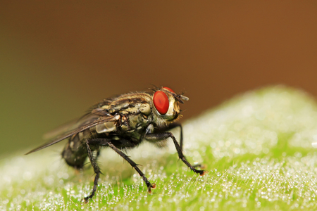 tachina fly on plant in the wild Stock Photo