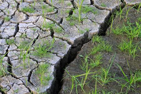 Dry land and grass 版權商用圖片