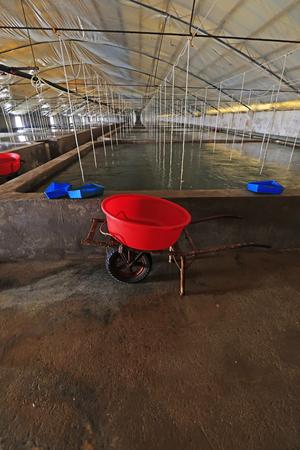 iron wheelbarrow in Mariculture workshop