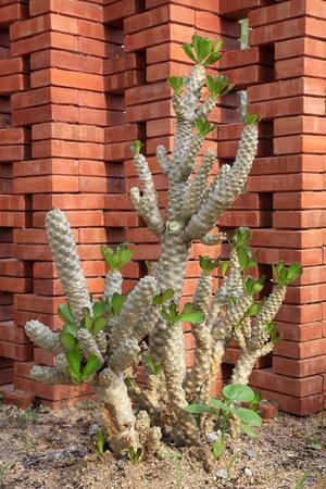 Euphorbiaceae in a Botanical Garden