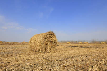 straw roll in the fields Stock Photo