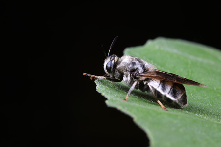 Diptera insects in nature Stock Photo