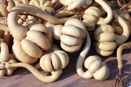 Special-shaped gourd Close-up