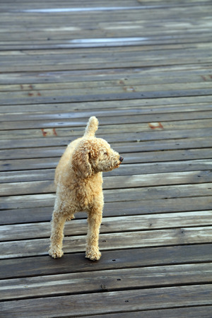 dog close up 版權商用圖片