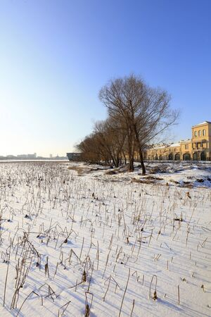 Snow scenes of urban parks in northern China Stok Fotoğraf