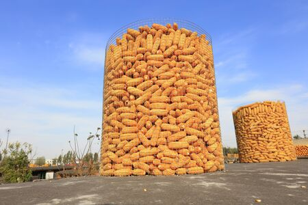 Corn hoarding on the roof 스톡 콘텐츠