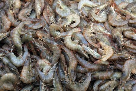 Fresh prawn meat