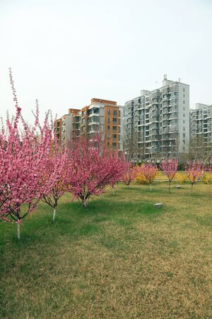 Buildings and beautiful flowers in spring