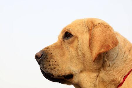 Pet dog close-up