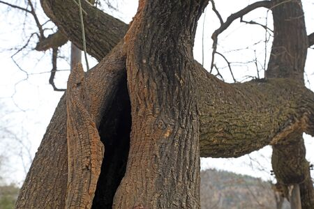 Tree holes in the forest