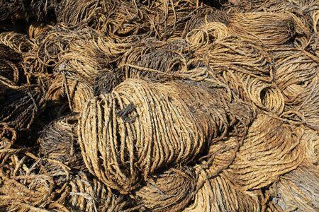 Rotten straw rope 版權商用圖片