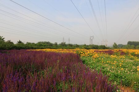 Wildflowers and electric towers in the park Banco de Imagens