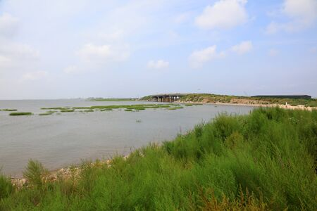 Green aquatic plants on the coast Stock Photo