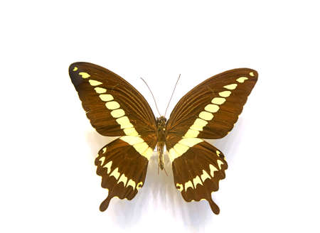 beautiful butterfly in the white background