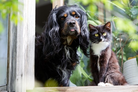 unruly: Cat and dog sitting on the windowsill Stock Photo