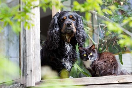 Cat and dog sitting on the windowsill Stock Photo
