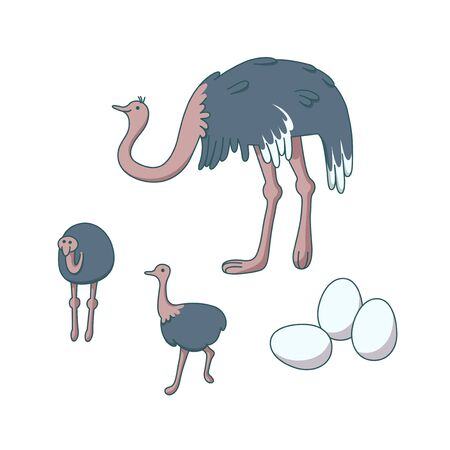 Ostrich family on white background. Animal farm with big birds. Vector illustration in cartoon style