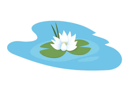 White water lily in the pond. Isolated vector illustration on white background 向量圖像