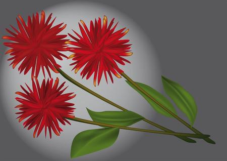 bouquet a dahlia   Vector