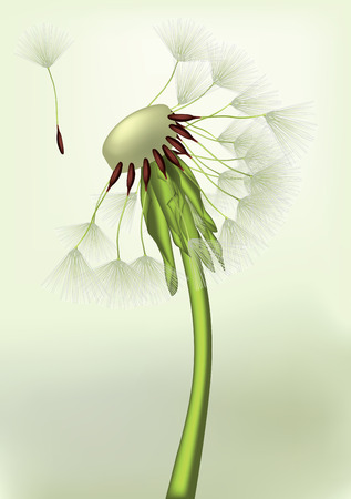 last dandelion on a wind Vector