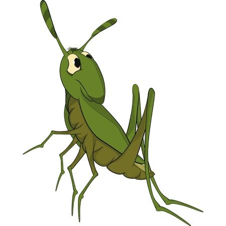 szarańcza: Zielony konik polny. Rysunek