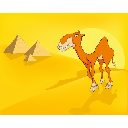 camel desert: Camel in desert. Pyramids. Cartoon  Illustration