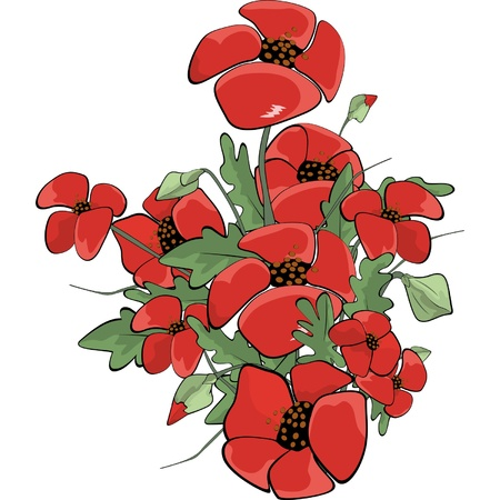 poppy field: Poppies  Cartoon  Illustration