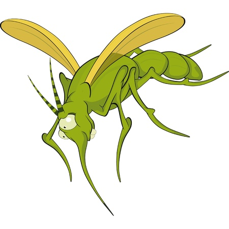 Terrible mosquito. Cartoon  Vector