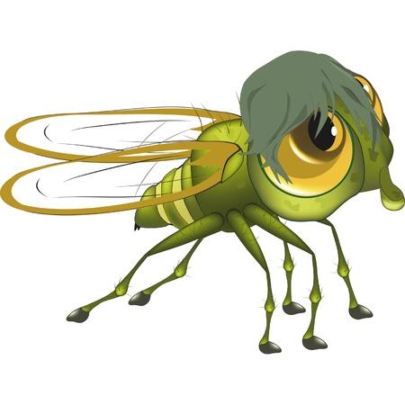 mosca caricatura: Fly. Dibujos animados