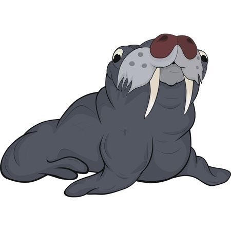 antarctica: Seal.Cartoon