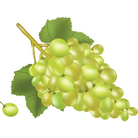 Grapes Stock Vector - 17314824