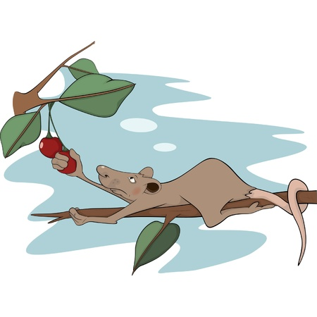 mustached: Rat and a cherry. Cartoon Illustration