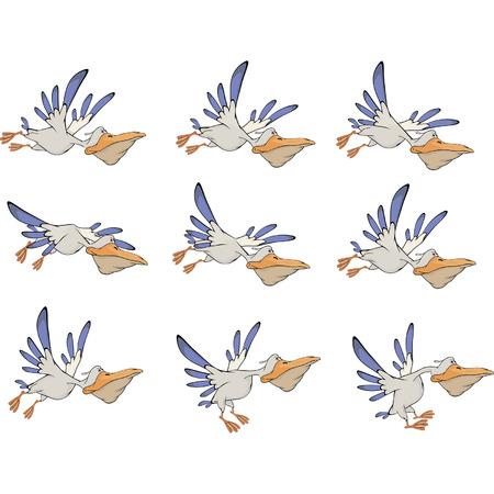 webbed: A set of pelicans storyboards Illustration