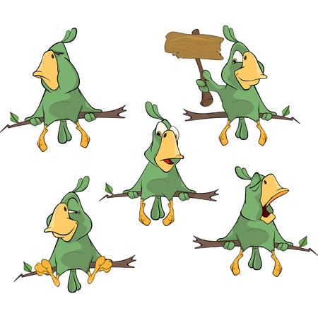 loros verdes: Conjunto de loros verdes lindo para que el dise�o