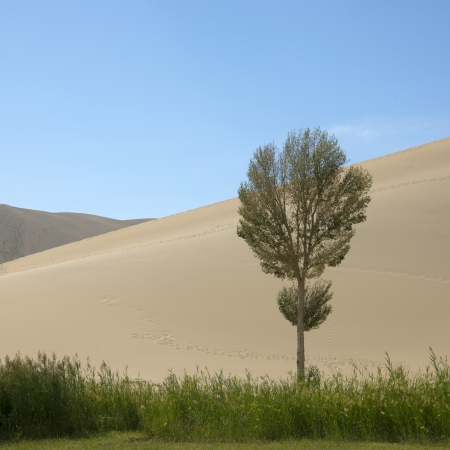Tree in the desert photo