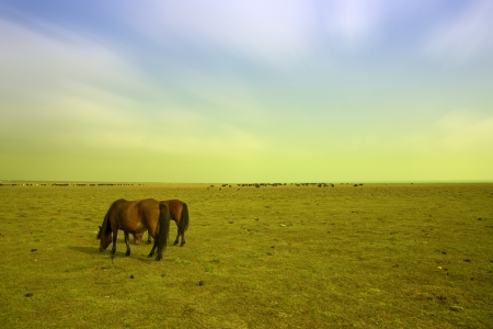 Horses and grassland in Qinghai, China. photo