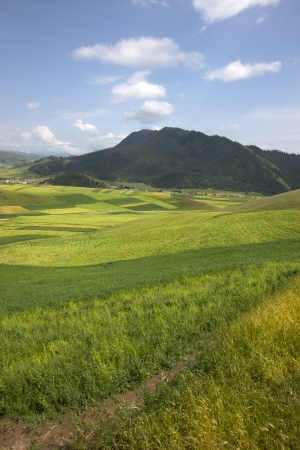 Grass Mountains photo