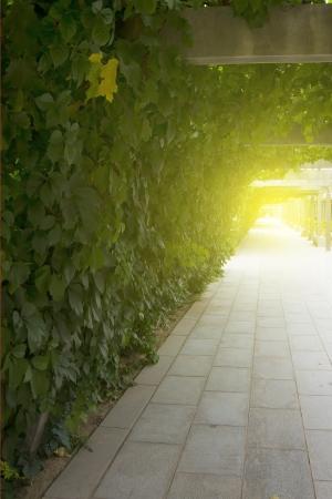Sunset plants corridors Stock Photo - 23143130