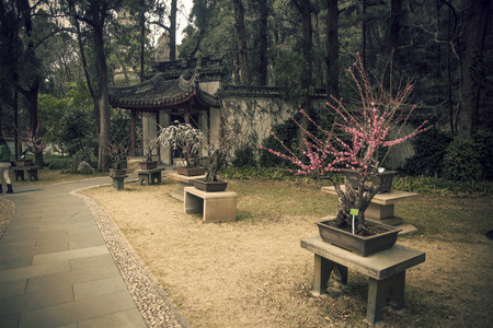 Chinese gardens and bonsai photo