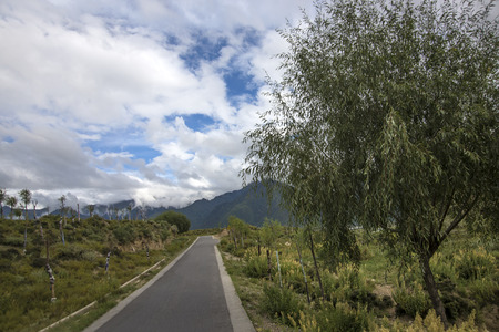 Trees and roads in rural areas photo