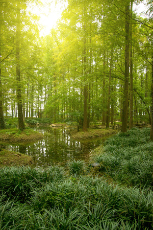 Forest river sun photo