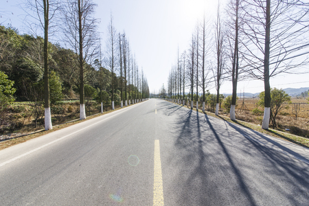 Forest road 스톡 콘텐츠