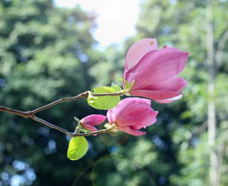 thriving: Microphyton flower