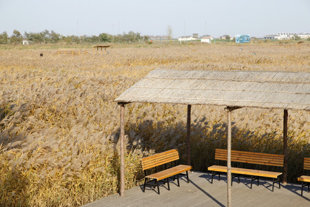 Scenery of wetland during autumn photo
