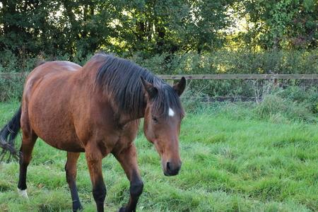 horse cantor Reklamní fotografie