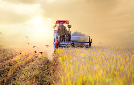 Harvesters are operating at dusk,Autumn harvest.