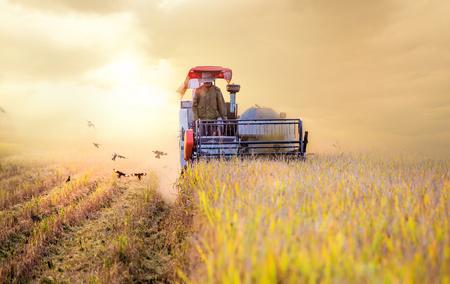 Harvesters werken bij zonsondergang, herfst oogst.